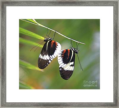 Back To Back. Framed Print by Robert Pearson