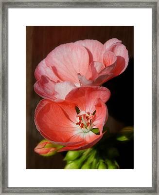 Backyard Flowers Framed Print by Art Tilley