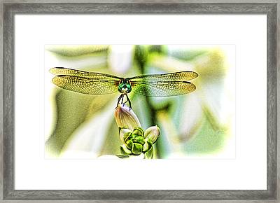 Balancing Act  Framed Print by Olahs Photography
