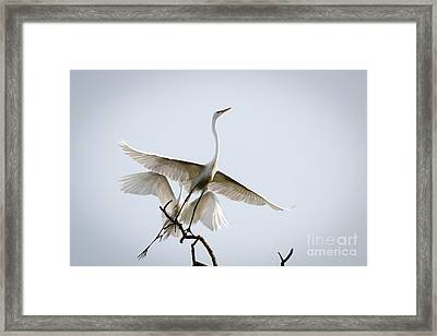 Ballet In The Sky Framed Print