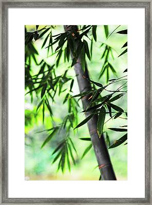 Bamboo Leaves Framed Print by Jenny Rainbow