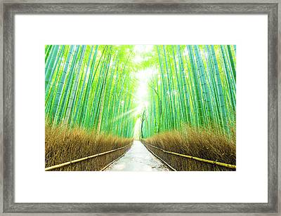 Bamboo Tree Forest Beams God Rays Straight Path H Framed Print