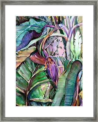 Banana Pod Framed Print by Mindy Newman