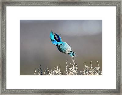 Framed Print featuring the photograph Bank Right by Mike Dawson