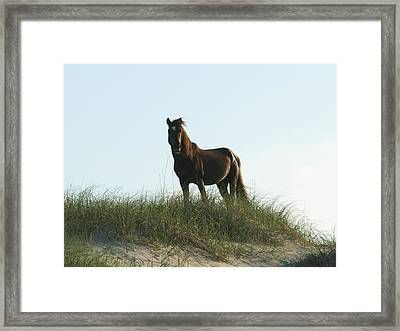 Banker Horse On Dune - 3 Framed Print