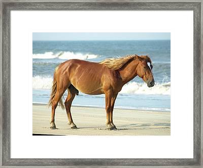 Banker Horses - 2 Framed Print