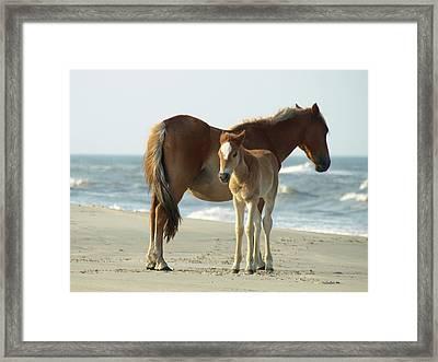 Banker Horses - 4 Framed Print