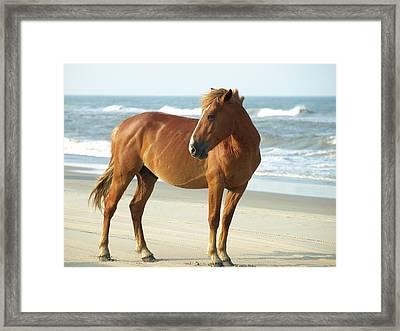 Banker Horses - 6 Framed Print