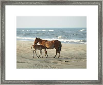 Banker Horses - 7 Framed Print