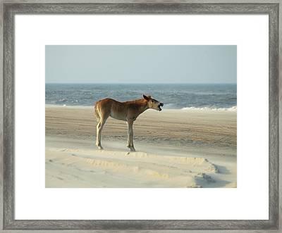 Banker Horses - 8 Framed Print