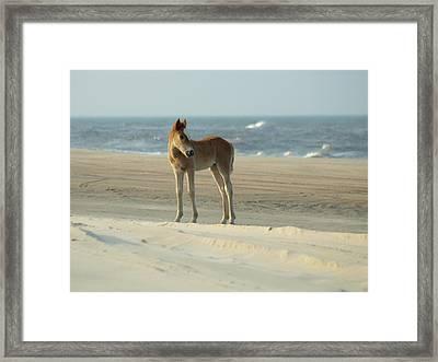 Banker Horses - 9 Framed Print