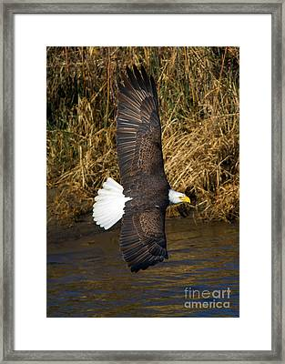 Banking Low Framed Print by Mike Dawson