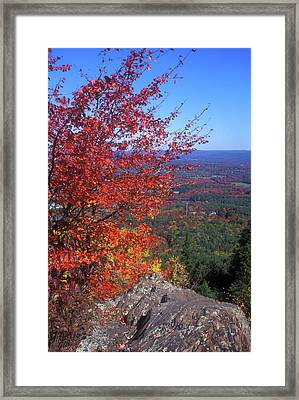 Bare Mountain Foliage View Framed Print