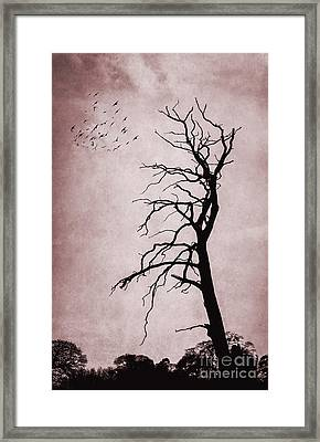 Bare Tree Framed Print by Svetlana Sewell