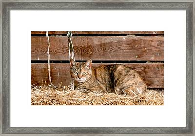 Barn Cat Framed Print