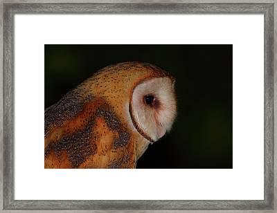 Barn Owl Profile Framed Print