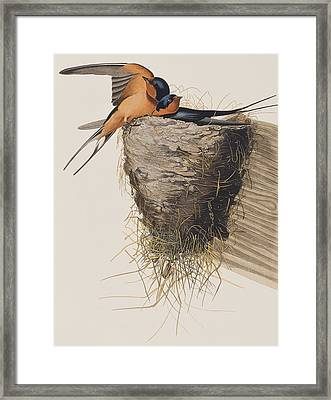 Barn Swallow Framed Print by John James Audubon