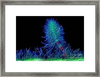 Batrachospermum, Polarized Lm Framed Print by Marek Mis