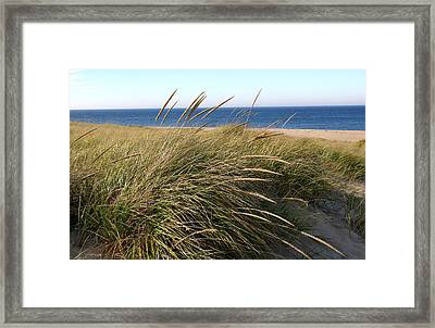 Beach Grass At Truro Framed Print by Frank Russell