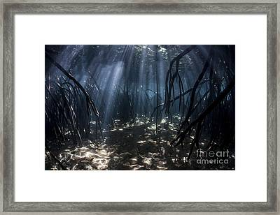 Beams Of Sunlight Filter Among The Prop Framed Print by Ethan Daniels