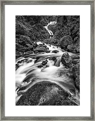 Beautiful Bunch Creek Falls In The Olympic National Park Framed Print