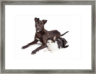 Beautiful Large Labrador Retriever Crossbreed Dog Framed Print by Susan Schmitz