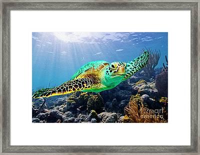 Beautiful Sea Turtle Framed Print by Jon Neidert