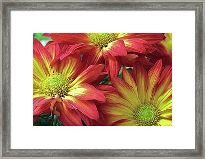 Framed Print featuring the photograph Beautiful Trio by Allen Beatty