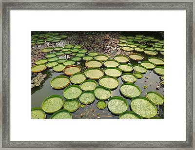 Beautiful Victoria Water Platters And Flowers Framed Print