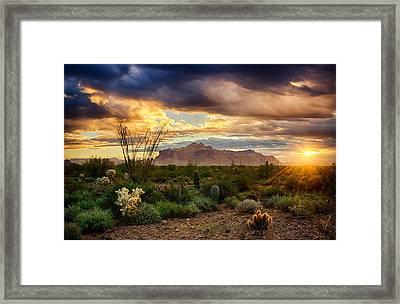 Beauty In The Desert Framed Print