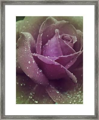 Beauty In The Rain Framed Print