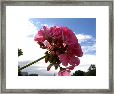 Beauty In The Sky Framed Print by Jeanette Oberholtzer