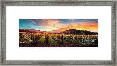 Morning Sun Over The Vineyard Framed Print