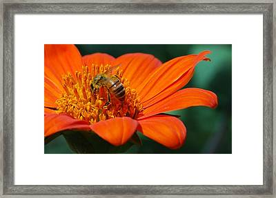 Bee-utiful Framed Print by Debbie Karnes