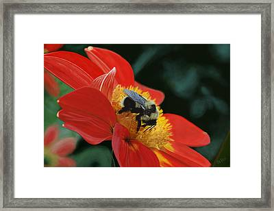 Beeutiful Framed Print by Kevin Phipps