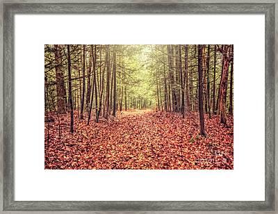 Before The Last Leaf Falls Framed Print by Evelina Kremsdorf
