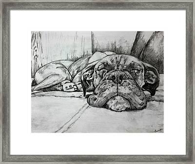 Bella Bean Framed Print