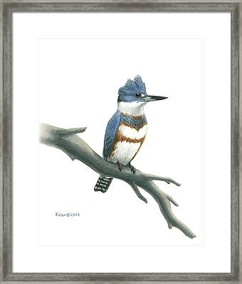 Belted Kingfisher Perched Framed Print