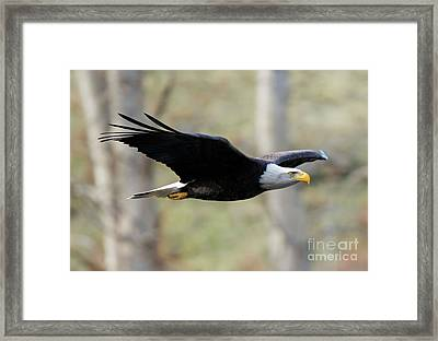 Beneath The Treetops Framed Print