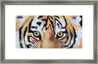 Bengal Eyes Framed Print