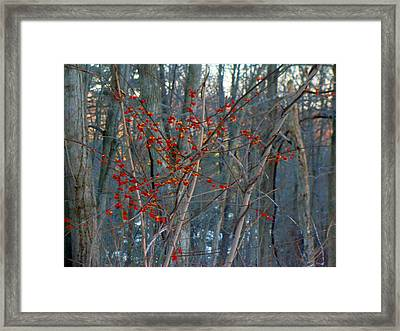 Berries In Bloom Framed Print by Kate Collins
