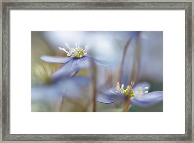 Between The Stalks Framed Print