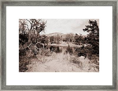 Between The Trees Framed Print by Mickey Harkins