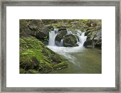 Big Pup Falls 3 Framed Print by Michael Peychich