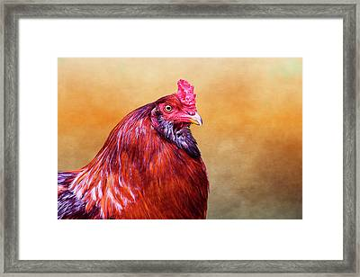 Big Red Rooster Framed Print by Carol Leigh