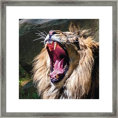 Big Yawn Framed Print