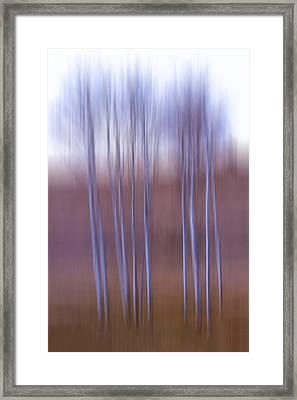 Birch  Framed Print by Naman Imagery