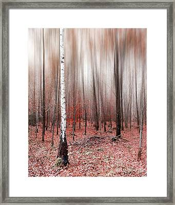 Framed Print featuring the photograph Birchforest In Fall by Hannes Cmarits