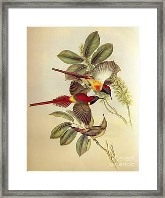 Bird And Flower Framed Print