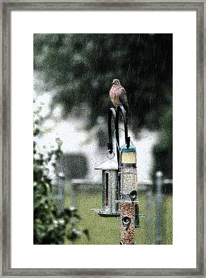 Framed Print featuring the photograph Bird Bath by Wanda Brandon